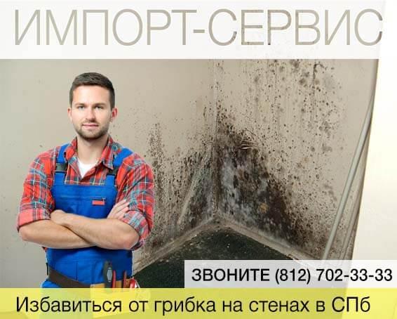 Избавиться от грибка на стенах в Санкт-Петербурге